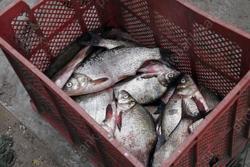 У троих браконьеров изъята 161 рыба, сети и лодки