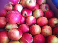 В область не пустили лук без маркировки и запрещенные яблоки