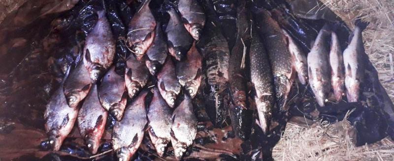 Шесть «рыбных» браконьеров поймали во время нереста в Вологодской области (ФОТО)