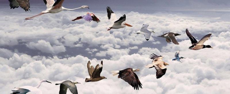 Событие дня: 11 мая - Всемирный день перелетных птиц