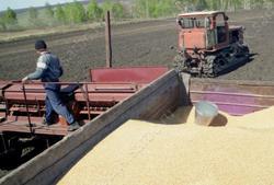 В Саратовской области засеяно на 2% больше плана - 2,685 млн га