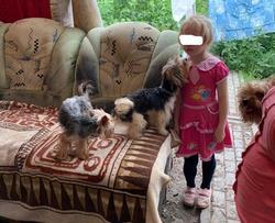 Следователи заинтересовались жизнью ребенка в подпольном собачьем приюте