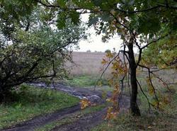 Охранные зоны памятников природы рассмотрят на слушаниях