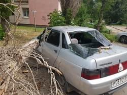 Сухой тополь во дворе обрушился на машину