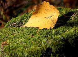 Сентябрь радует теплой погодой