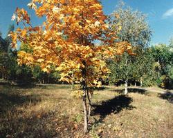Осень балует саратовцев приятной погодой