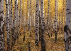 Участок с лесом вернули в муниципальную собственность