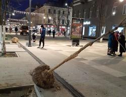 На проспект Кирова привезли новые деревья