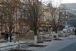 Эксперт о деревьях на проспекте Кирова: