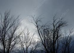 Ноябрь закончится теплом и дождями