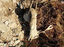 Останки животных и бытовой мусор сваливают на сельском пустыре