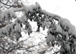Прогнозируются ветер, снег и потепление