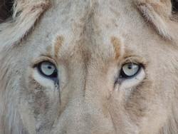 Горожане жалуются на содержание животных в зверинце в Солнечном