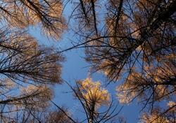 В области продолжат ставить камеры видеонаблюдения в лесах